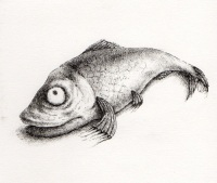 The Wee Red Herring - Don't Look at Me!